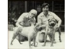 Chinese fighting dog breed being extinct and recreated in 1960