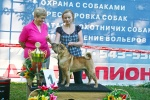 Daoshao Absolute Reality Chernyi Chizh J.RUS Champion, RUS Champion, Club Winner, Grand Champion