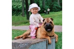 shar pei and children? Have you more questions?