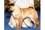 CH Success` Heisman Trophy AKC Champion