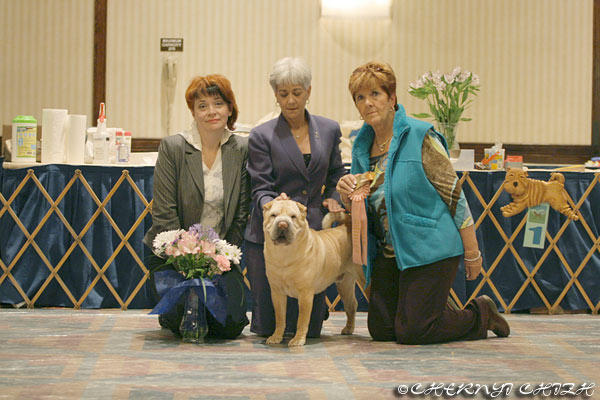 The Chinese Shar Pei Club Of America National Specialty 2009, Denver, Colorado part 3